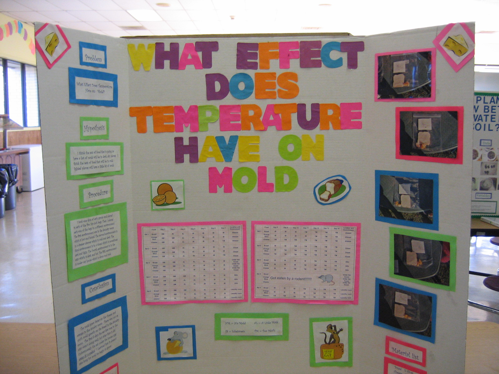 mold science project Moldy breads problem scenario what benefit to community and/or science my experiment can be used to help people find out what breads to get to save money because they dont mold as fast the only problem with that is most breads that dont mold are filled with chemicals lots of people could.