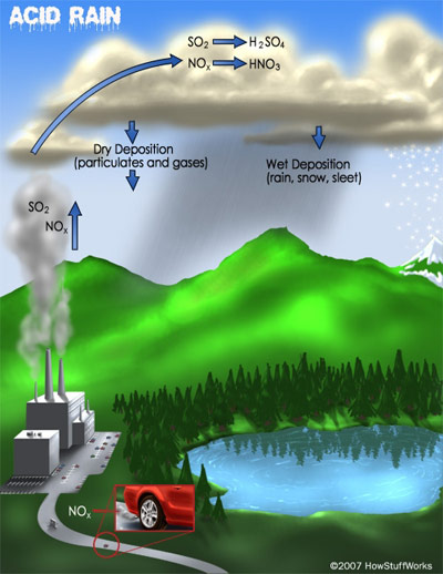 a look at the causes formation and effects of acid rain Acid rain can have harmful effects on plants,  he coined the term acid rain in 1872 causes acid rain is caused by acids mixing with air the largest source.