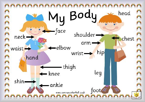 Identify Body Parts